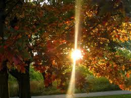 begin herfst