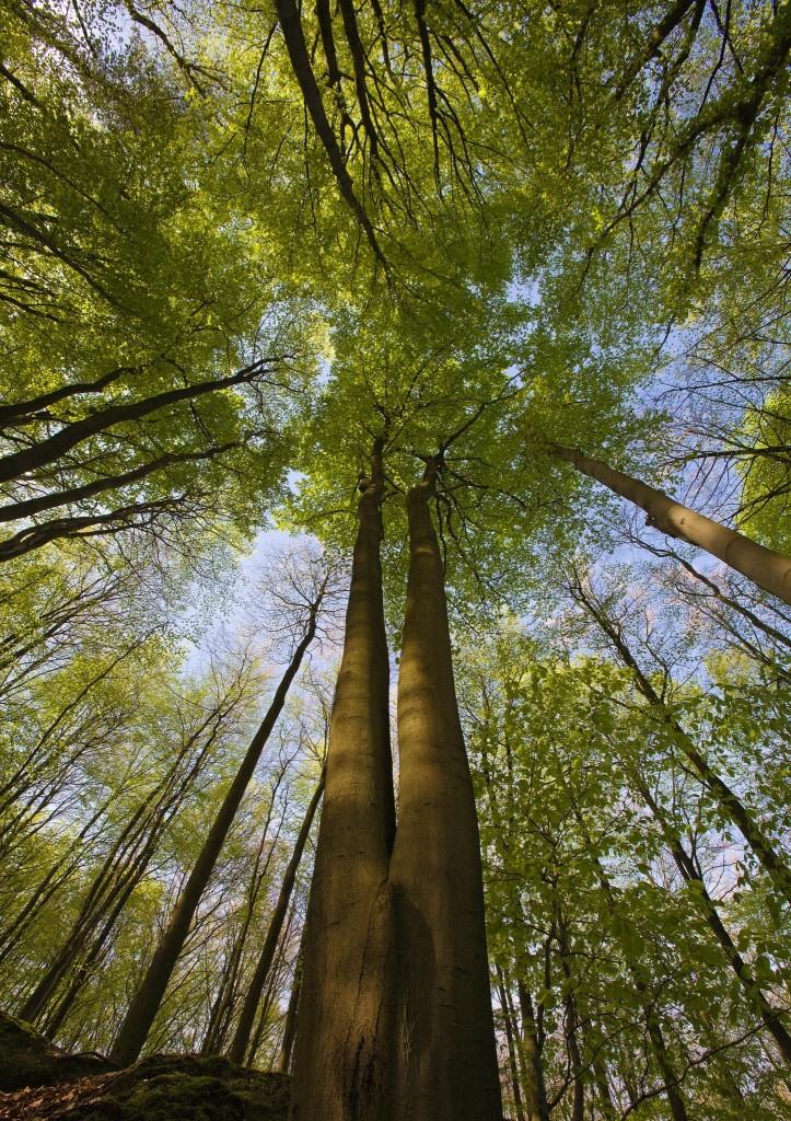 hoge-bomen-2-96224